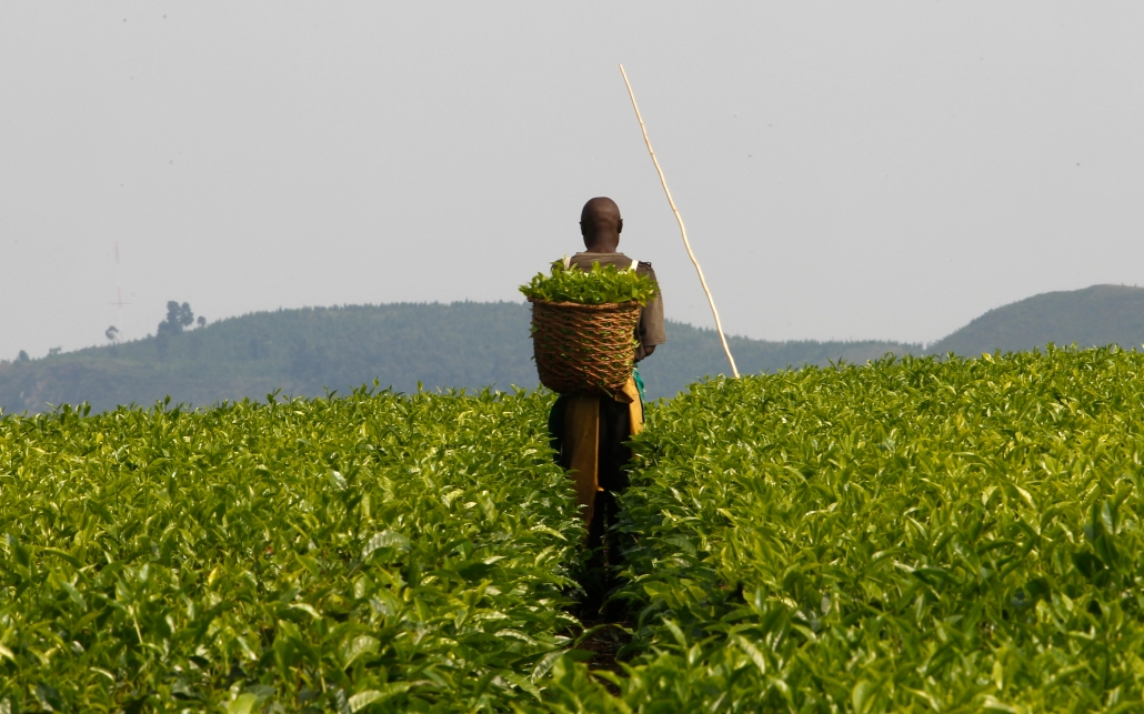 agriculture and the national economy Today, five commodities (soybean, sugar, meat, corn and milk) account for 68 percent of the total national agricultural production value, with soybean and related products making up 387 percent of brazilian agribusiness exports.