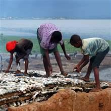 Women and children cure fish in the small Lake Victoria port of Ggaba, Uganda March 8, 2006.