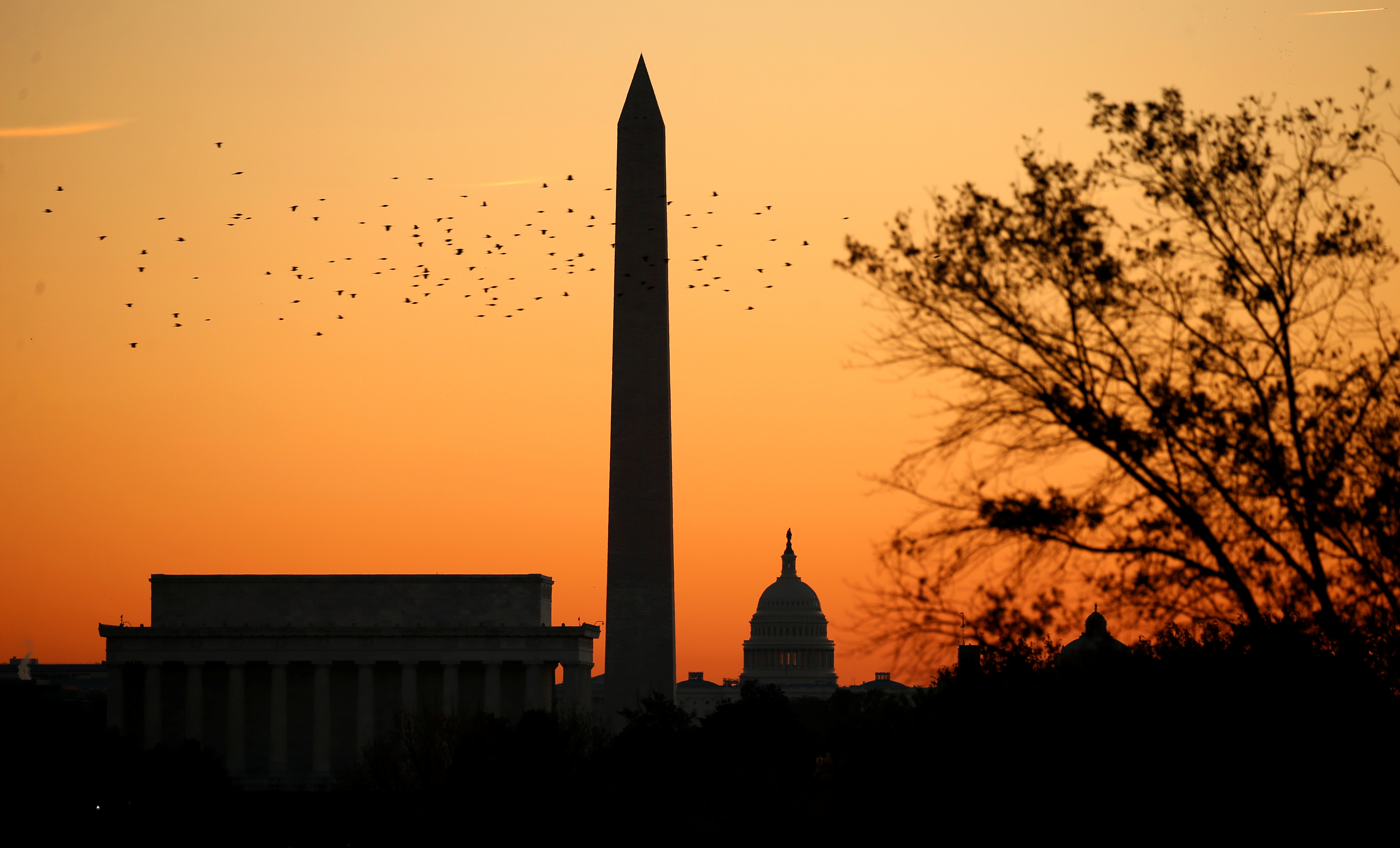 Birds are silhouetted as they fly over the Lincoln Memorial.