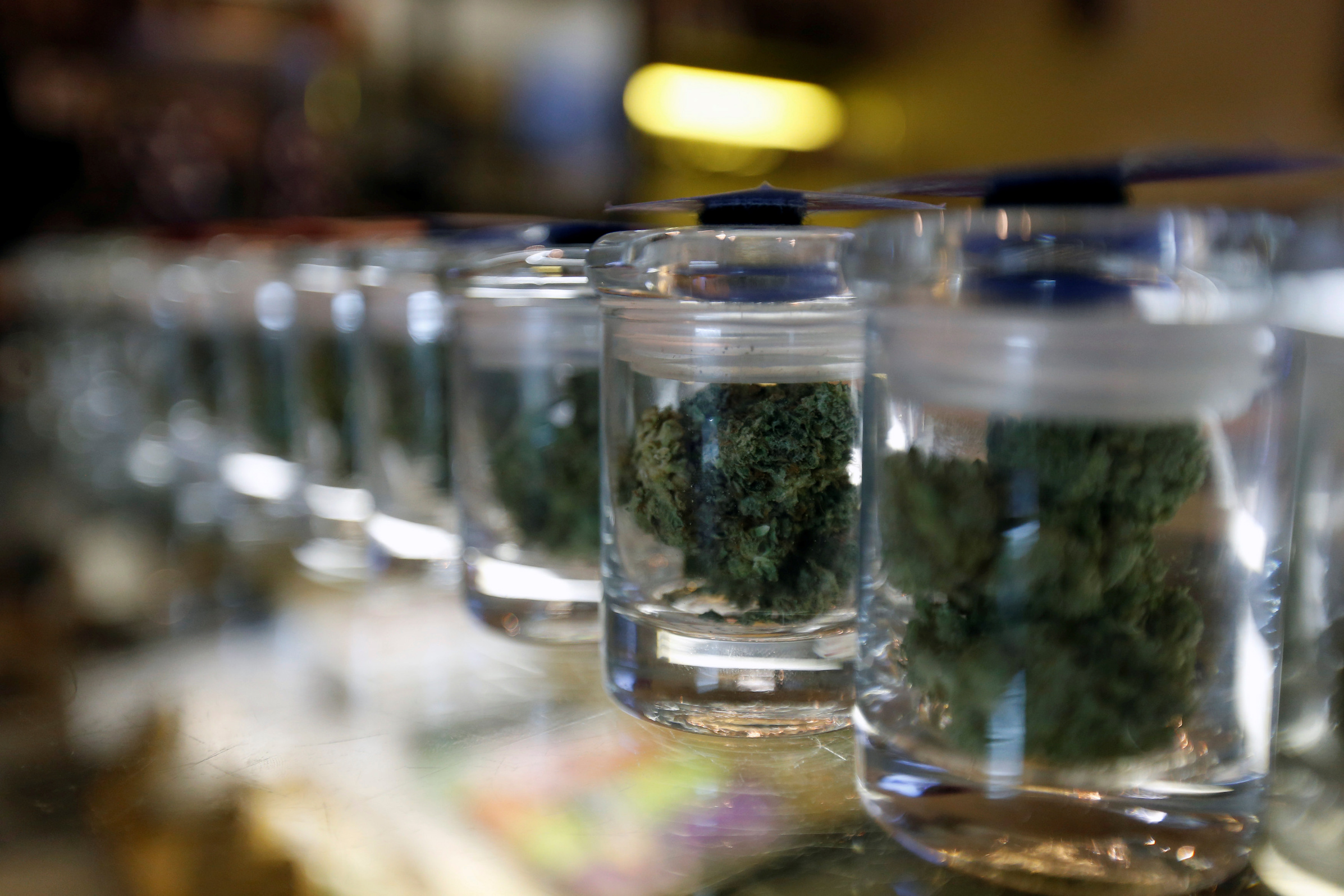 A variety of medicinal marijuana buds in jars are pictured at Los Angeles Patients & Caregivers Group dispensary in West Hollywood, California U.S., October 18, 2016. Picture taken October 18, 2016. REUTERS/Mario Anzuoni - RTX2R4MU