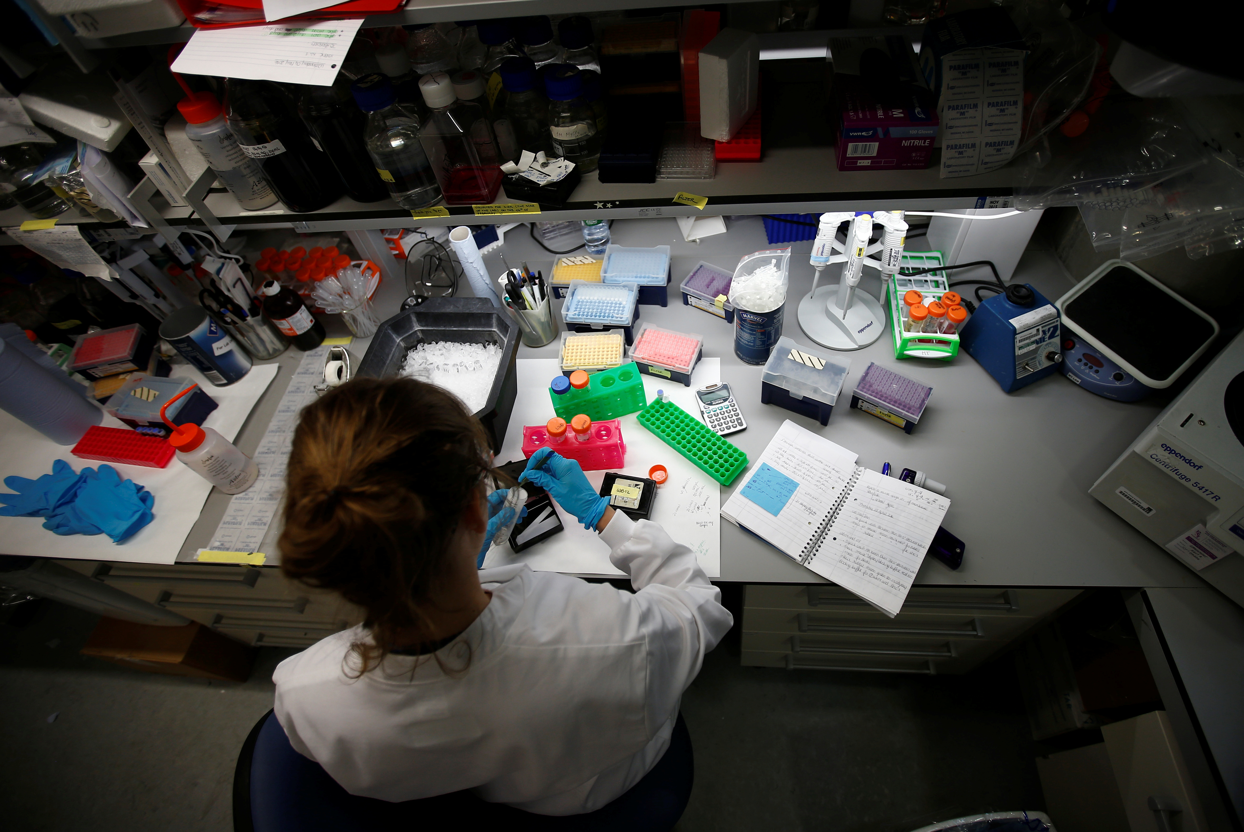 A scientist working in cancer research laboratories at Oxford University