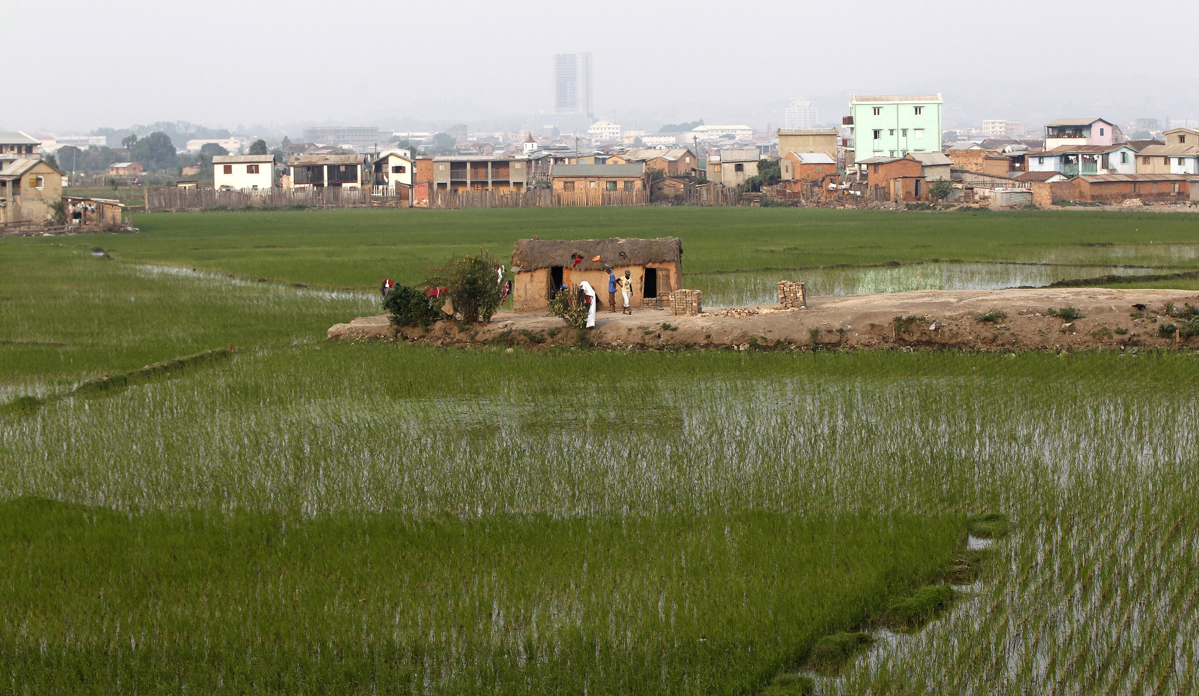 A house stands within a paddy field in Madagascar's capital Antananarivo, October 23, 2013. Voters in Madagascar's presidential election on Friday desperately hope for an end to a five-year political crisis that has scared off investors and severely damaged the economy, but there is little optimism they will get their wish. REUTERS/Thomas Mukoya (MADAGASCAR - Tags: POLITICS ELECTIONS SOCIETY) - GM1E9AO03RO01