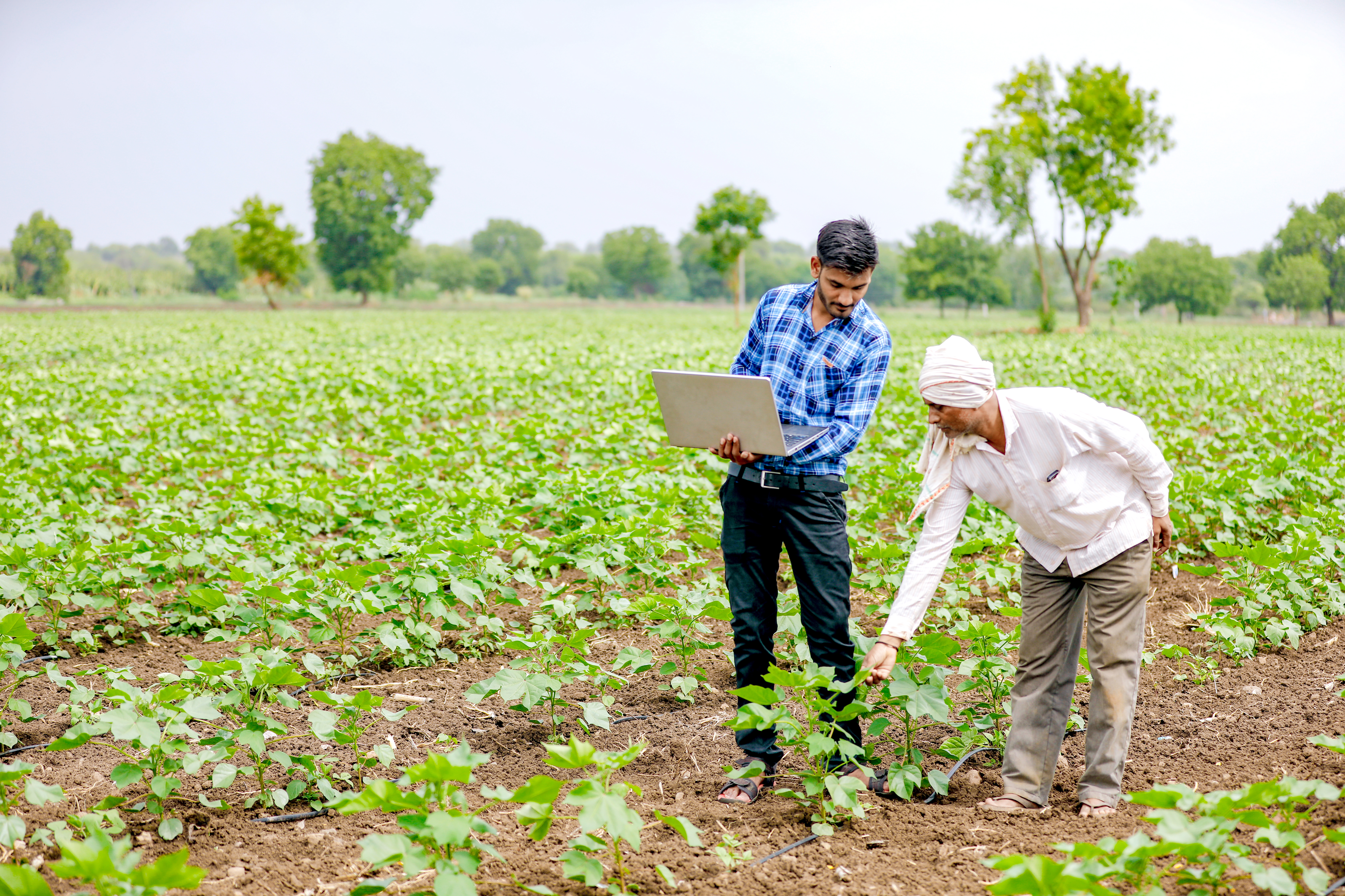 The promise of impact investing in India
