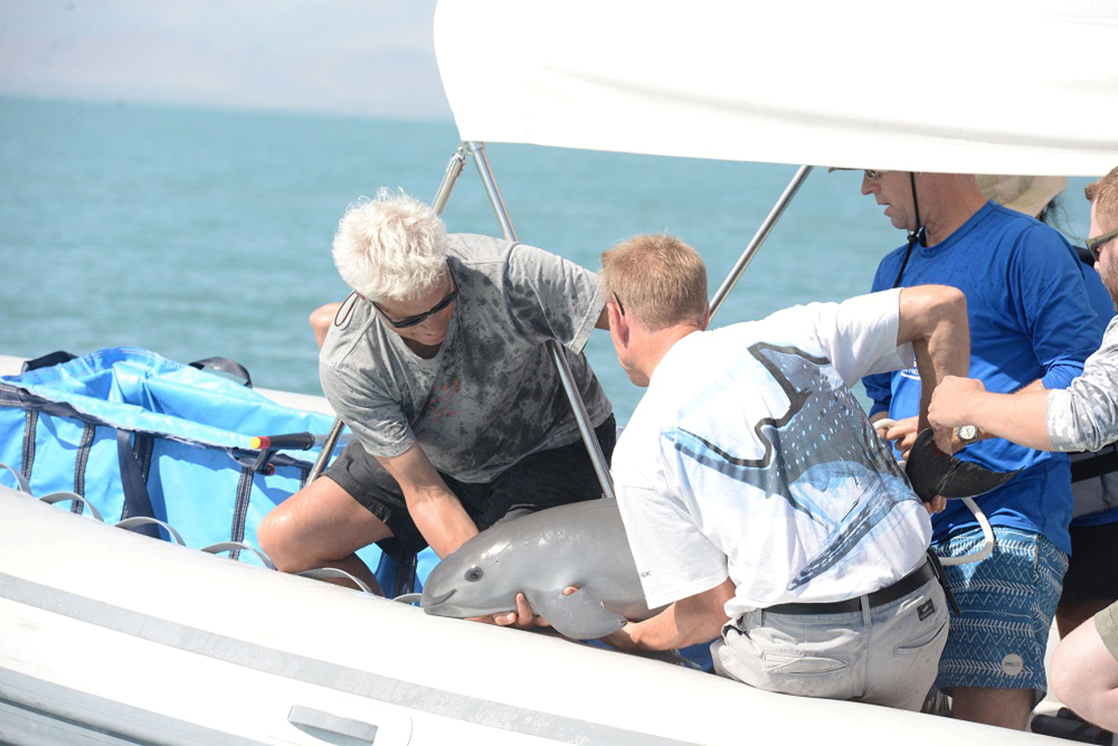 FILE PHOTO: Scientists return a vaquita, a tiny stubby-nosed porpoise on the verge of extinction, into the ocean as part of a conservation project, in the Sea of Cortez, Baja California, Mexico October 18, 2017.  Semarnat/Handout via REUTERS ATTENTION EDITORS - THIS IMAGE HAS BEEN SUPPLIED BY A THIRD PARTY./File Photo