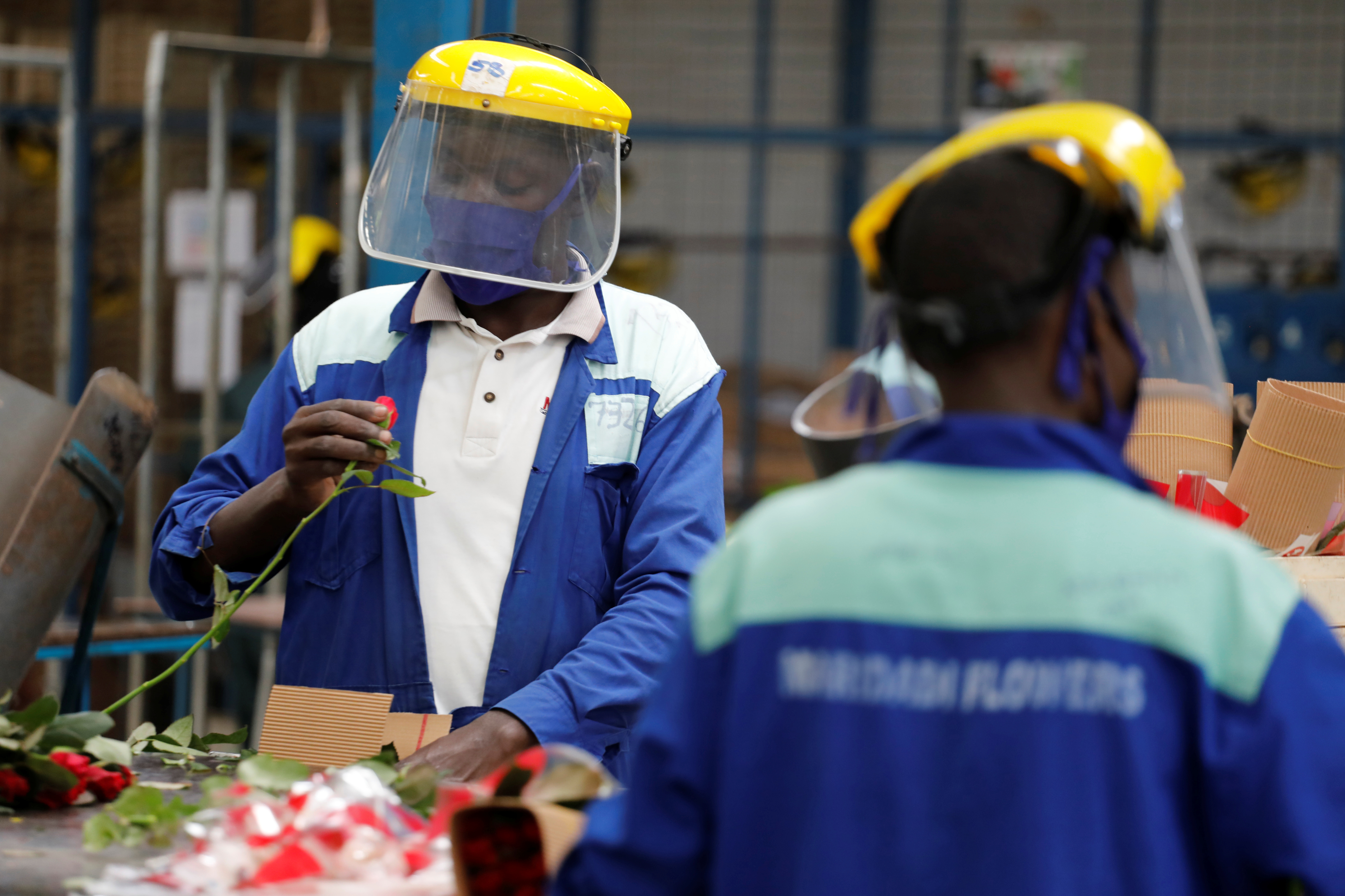 Workers sort roses on the packing line while wearing protective equipment to help fight against the spread of the coronavirus disease (COVID-19) at the Maridadi flower farm in Naivasha, Kenya, July 20, 2020. Picture taken July 20, 2020. REUTERS/Baz Ratner